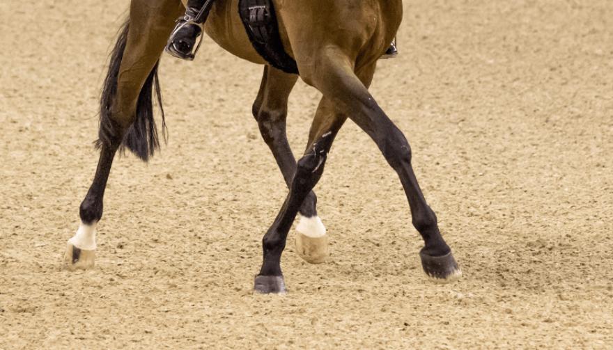 bay_dressage_horse_halfpass_show