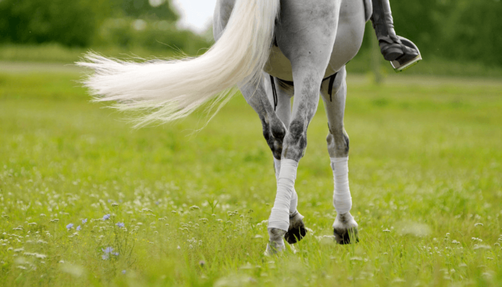dressage_horse_tail_grey