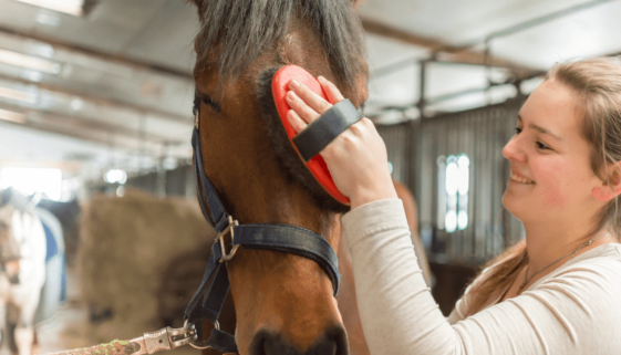 girl_smiling_and_grooming_horse